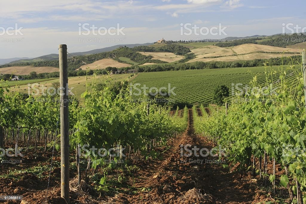 Vineyard with View to St Angelo Orcia stock photo