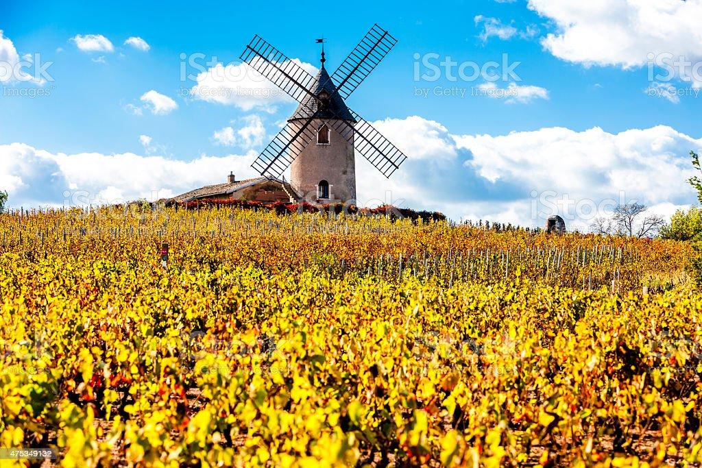 vineyard with windmill near Chenas stock photo