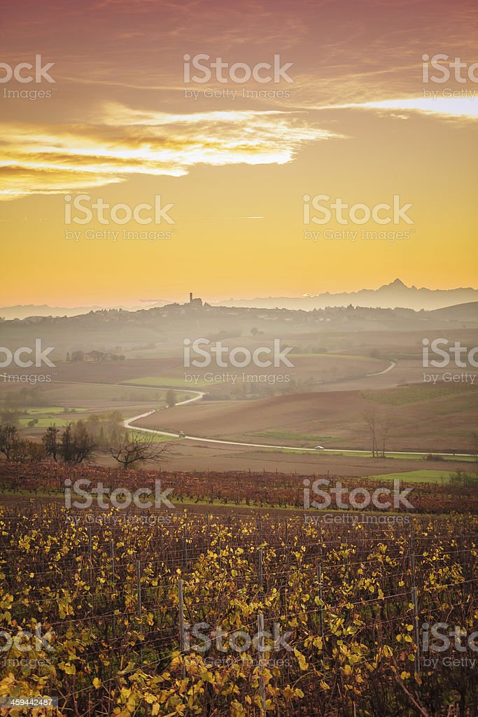 Vineyard with Yellow Leaves On Hill in Autumn at Sunset. stock photo