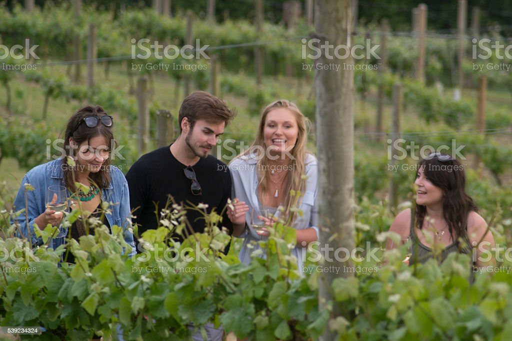 Vineyard wonder stock photo