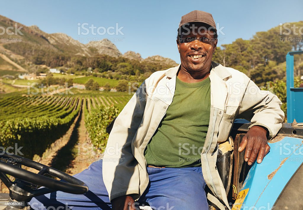 Vineyard worker sitting on his tractor smiling. stock photo