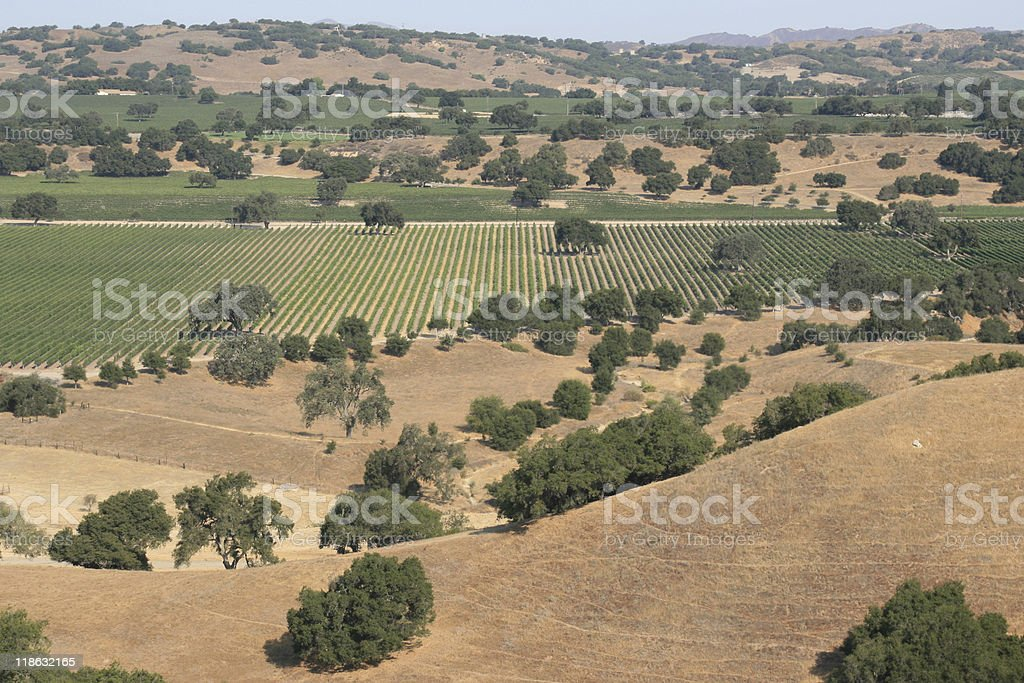 Vineyards aerial royalty-free stock photo