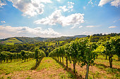 Vineyards along South Styrian Wine Road in autumn, Austria Europe