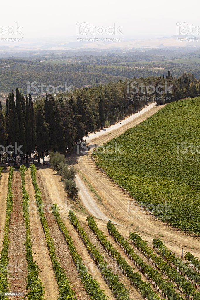 Vineyards and cypress royalty-free stock photo