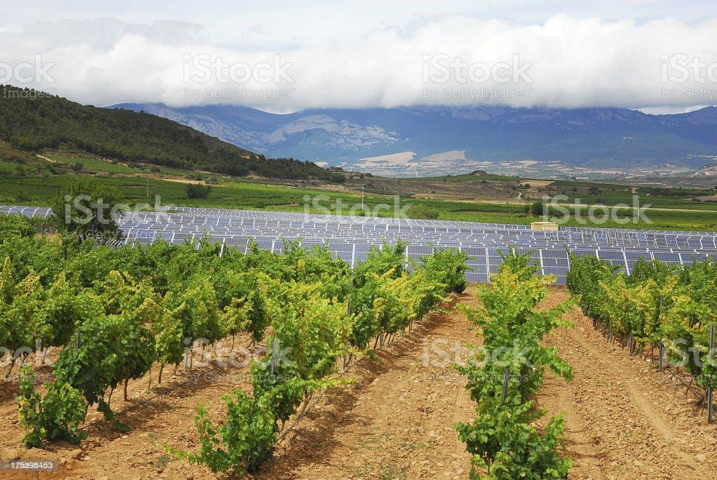 Vineyards and Energy stock photo
