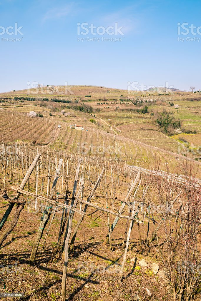 Vineyards and farmland on the hills in spring. stock photo