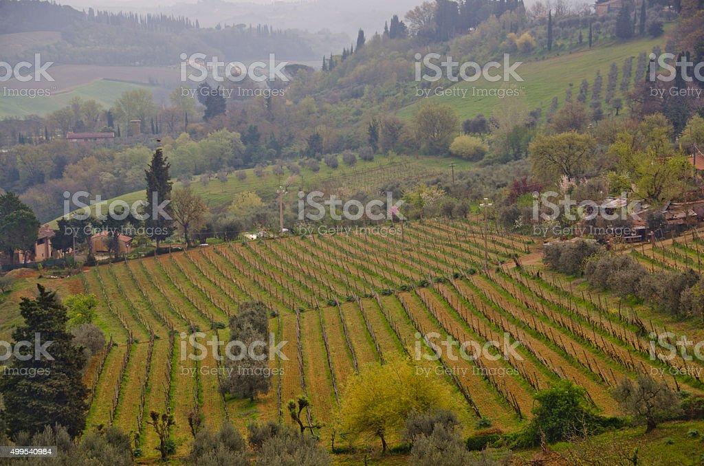 Vineyards and Hillsides Around San Gimignano, Italy stock photo