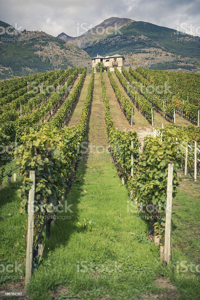 Vineyards and Mountains royalty-free stock photo