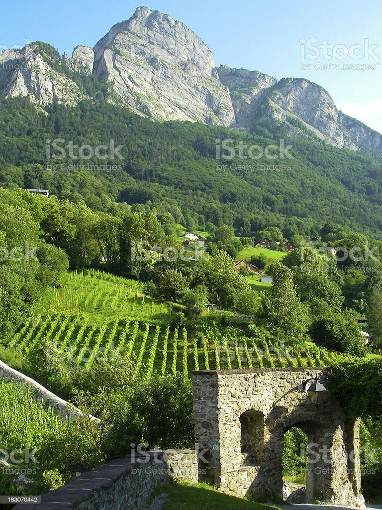 Vineyards And Mountains Swiss Alps Near Sarganz Switzerland stock photo