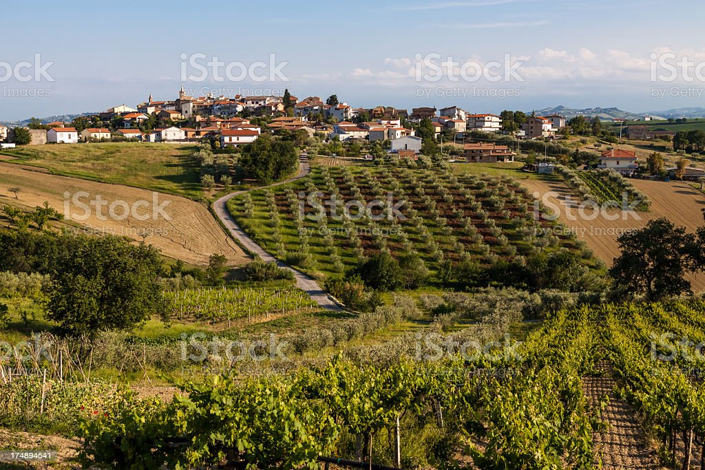 Vineyards and olive groves in Abruzzo, Italy royalty-free stock photo