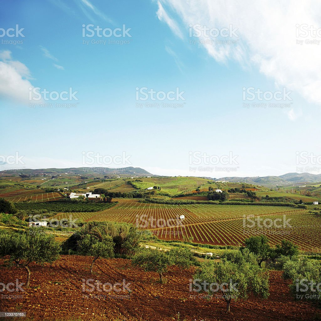 Vineyards and olive tree fields. royalty-free stock photo