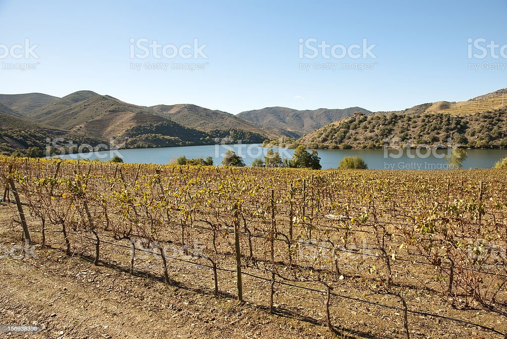 Vineyards at Douro river valley, Portugal royalty-free stock photo