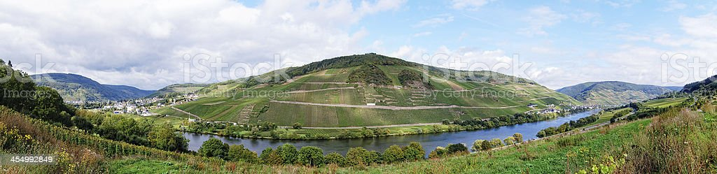 Vineyards at Mosel Valley stock photo