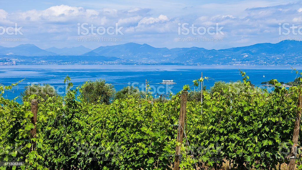 Vineyards At The Lake, Italy stock photo