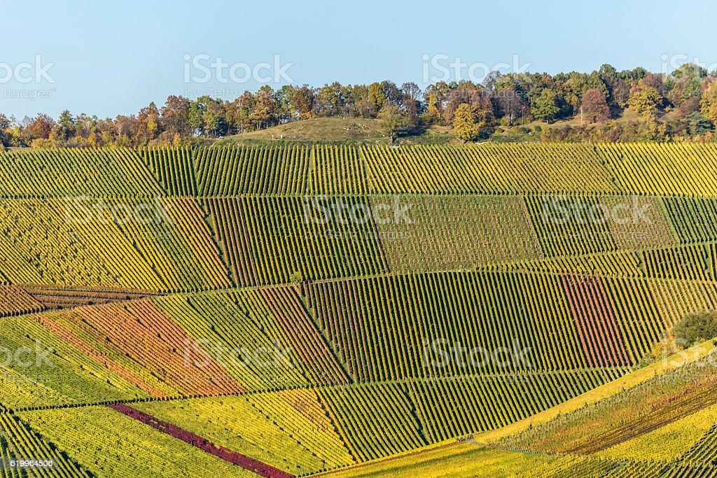 Vineyards - beautiful landscape of wine region stock photo