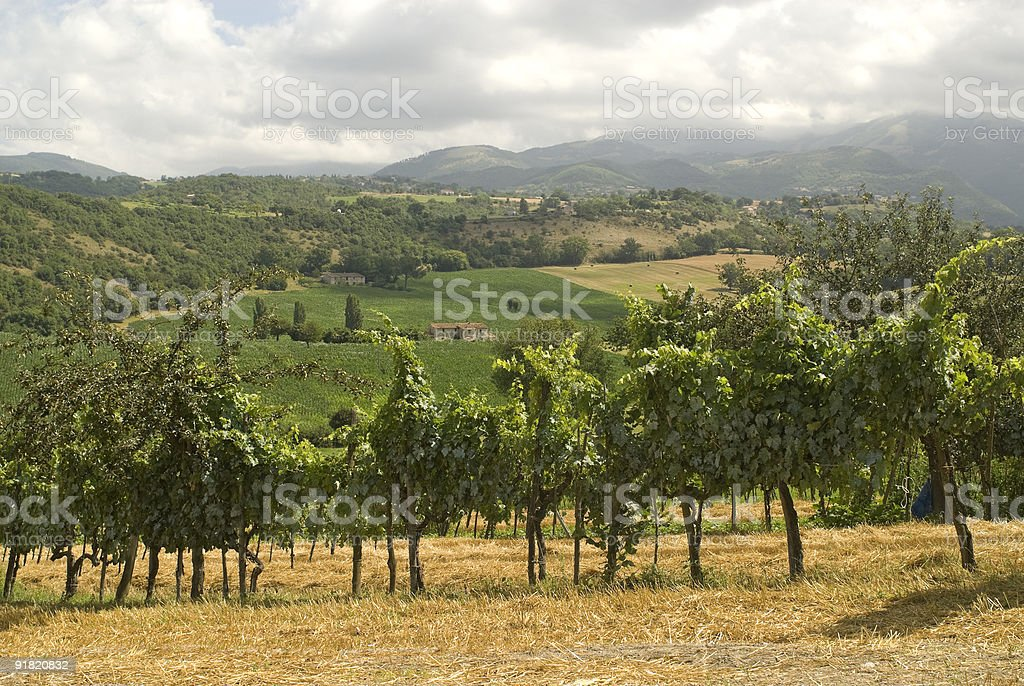 Vineyards between Rieti and Terni royalty-free stock photo