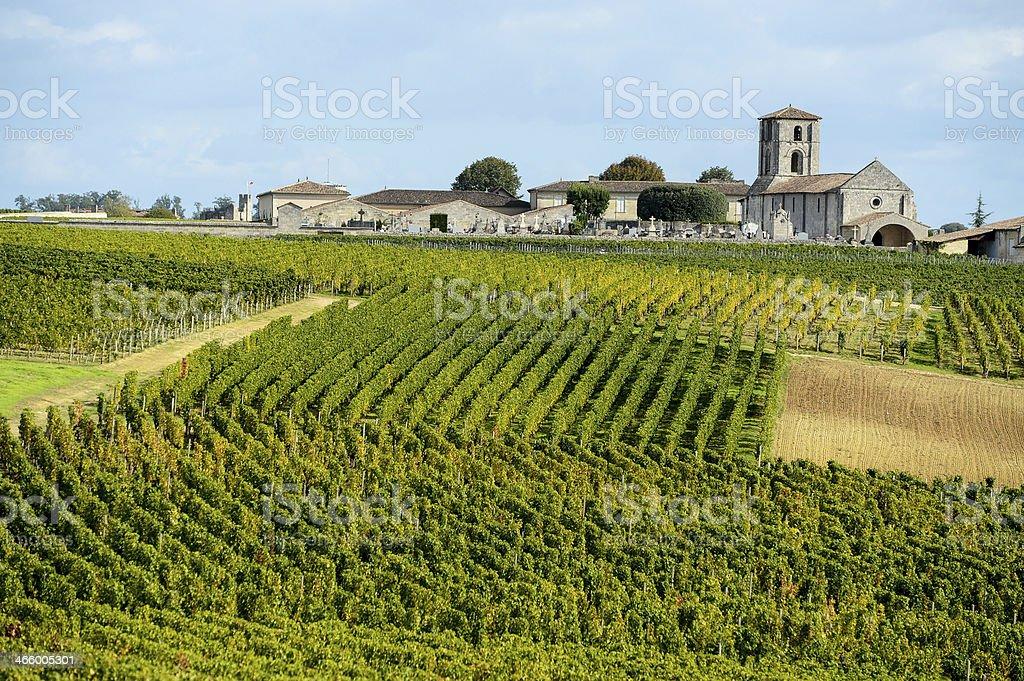 Vineyards Bordeaux Saint-Emilion stock photo