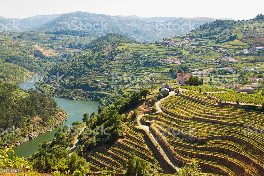 vineyards ribeira do Douro stock photo