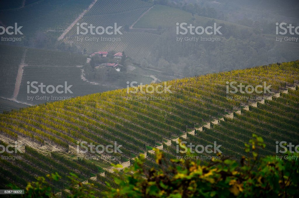 vineyards gold files stock photo