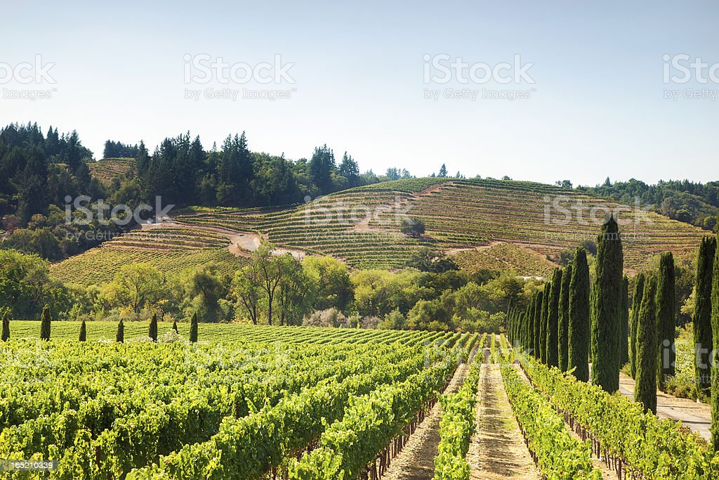Vineyard's Hills in California stock photo