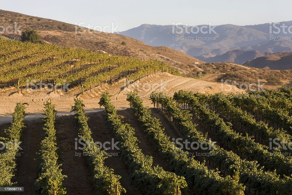 Vineyards, Hillside Grapevines, Winery, Agriculture Landscape royalty-free stock photo