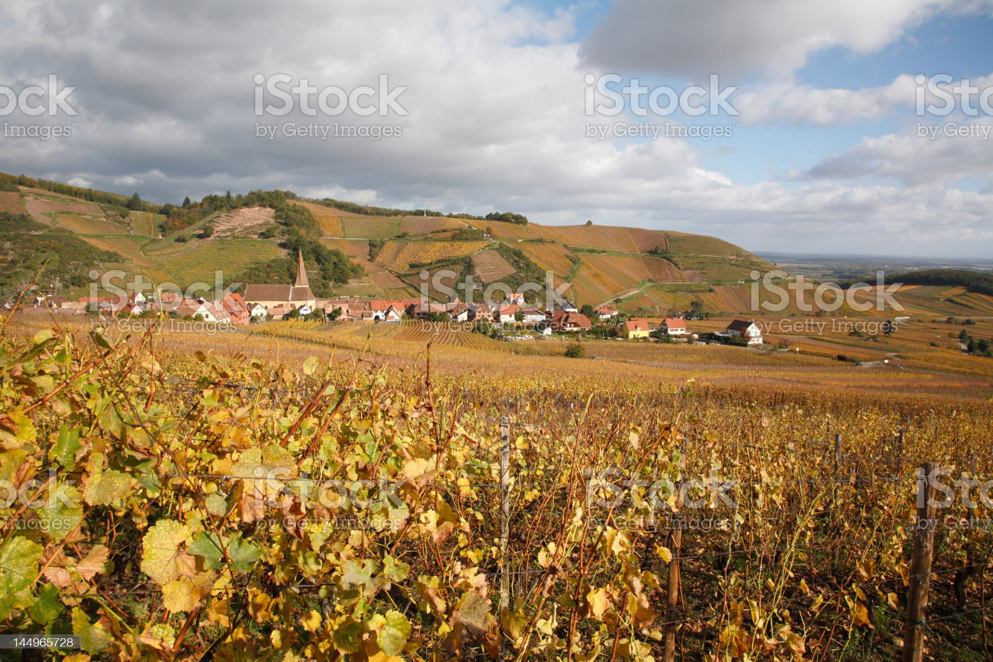 Vineyards in Alsace near Colmar royalty-free stock photo