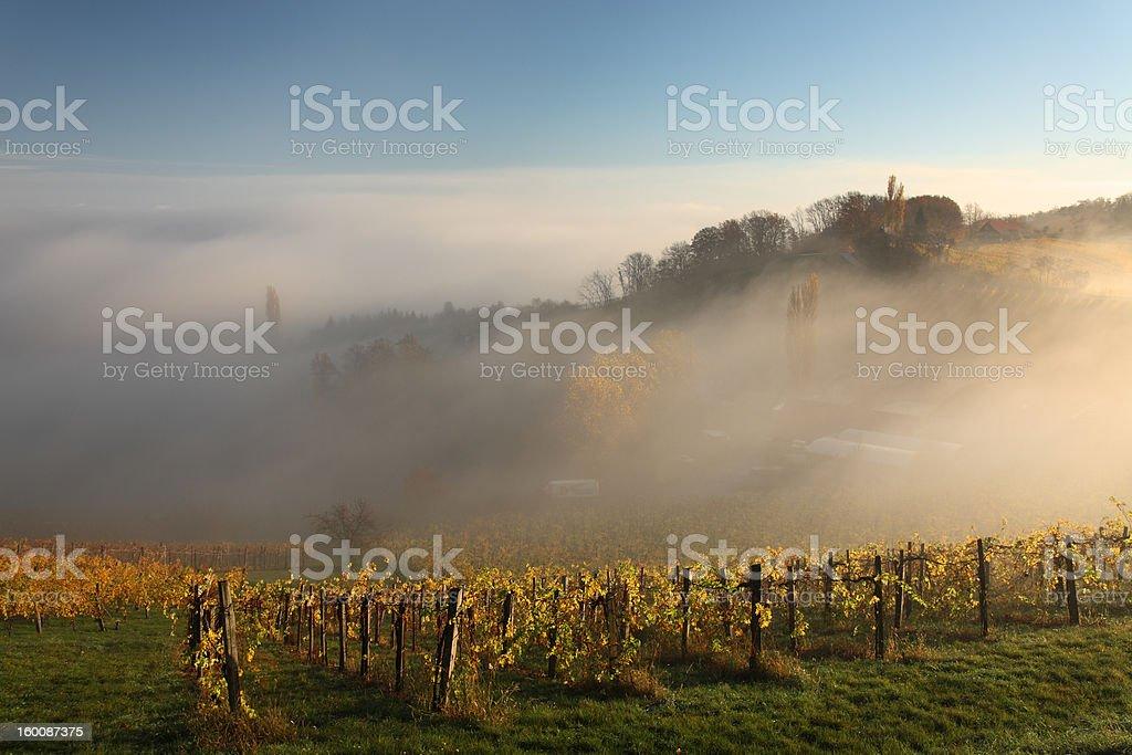 Vineyards in Austria stock photo