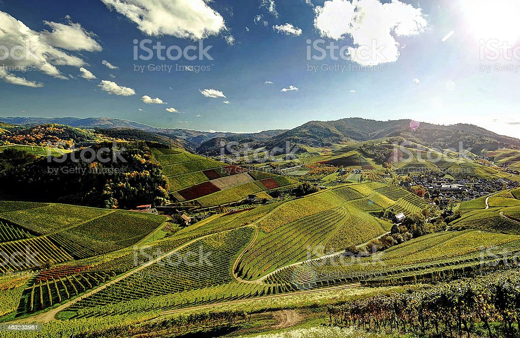 Vineyards in autumn, Black Forest, Germany stock photo