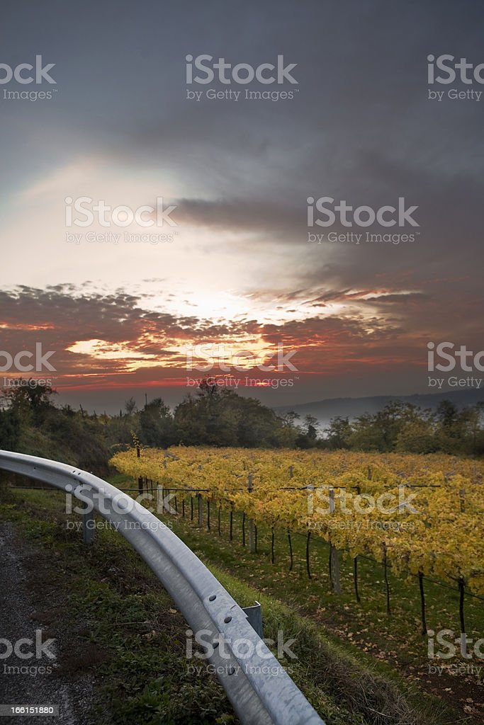 vineyards in autumn royalty-free stock photo