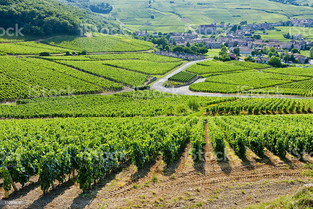 vineyards in Burgundy stock photo