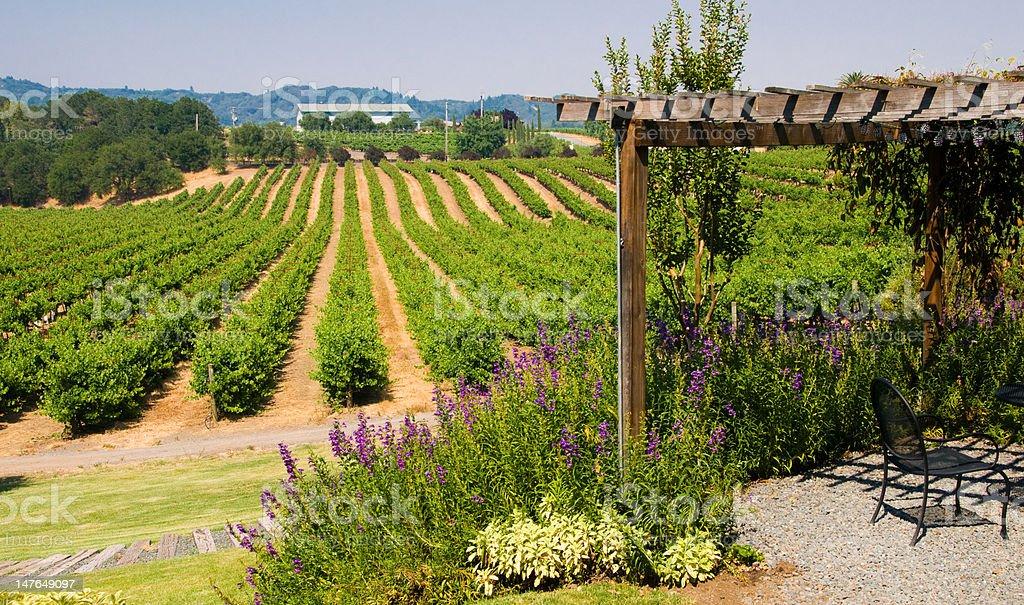 Vineyards in California royalty-free stock photo