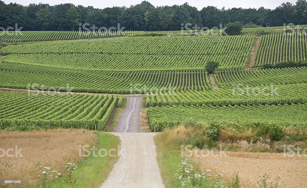 Vineyards in Champagne (France) at summer royalty-free stock photo