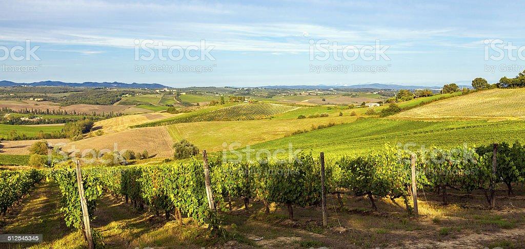 Vineyards in Chianti region. Color image stock photo