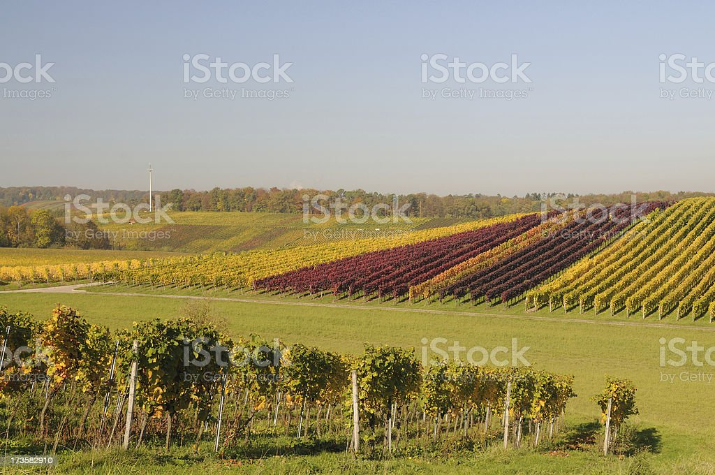 Vineyards in different Colors Fall stock photo