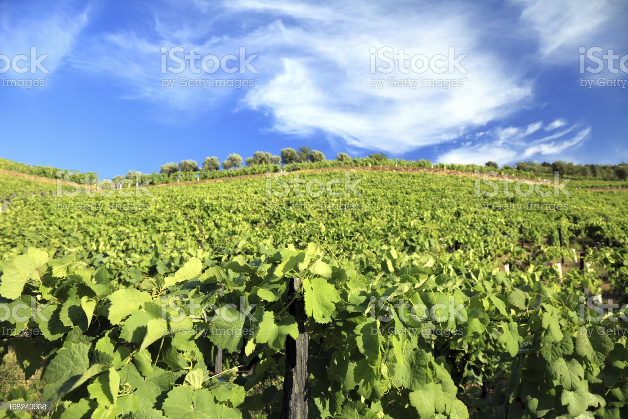 Vineyards in Douro Valley royalty-free stock photo