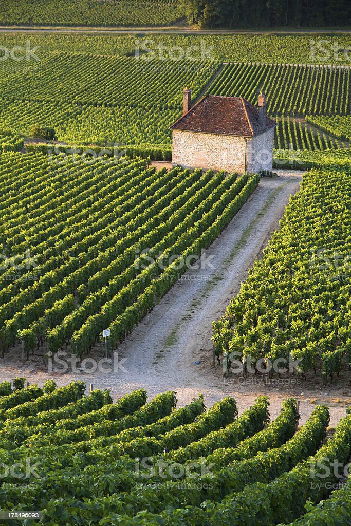 Vineyards in Gevrey chambertin burgundy France royalty-free stock photo
