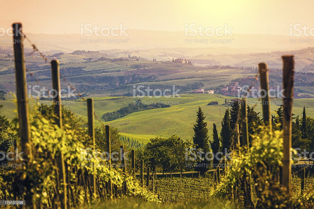 Vineyards in Italy at Sunset, Chianti Region stock photo
