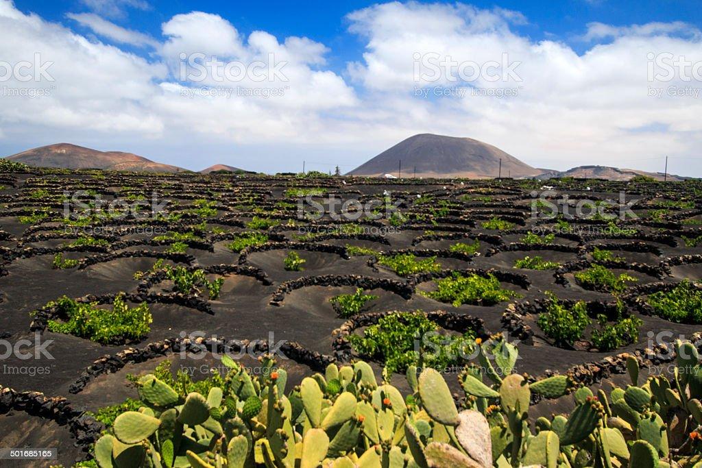 Vineyards in La Geria, Lanzarote, canary islands, Spain stock photo