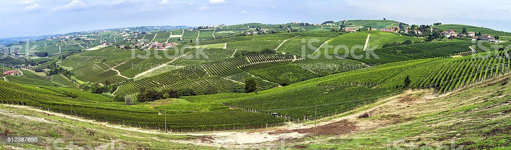Vineyards in Langhe's hills. Color image stock photo