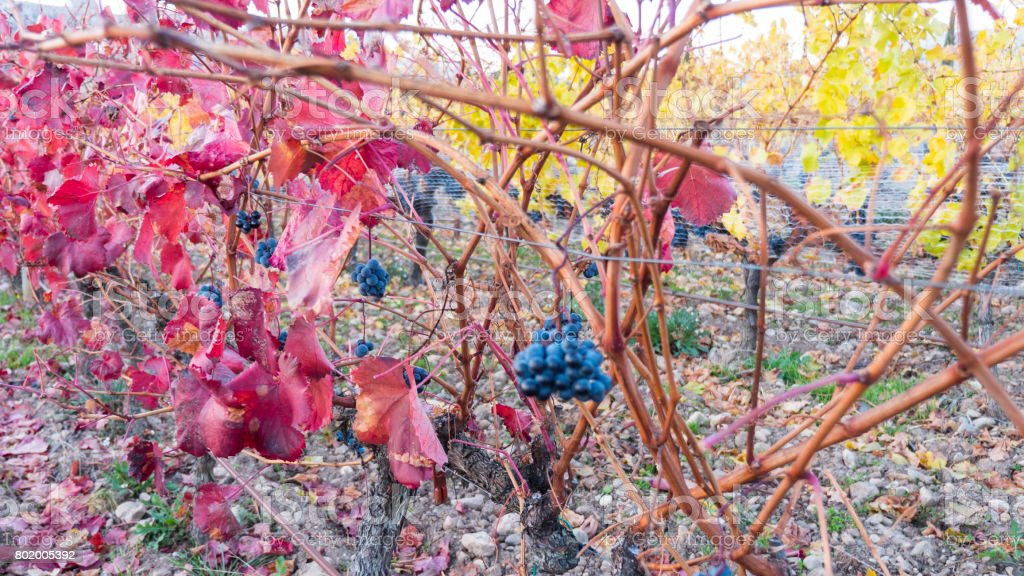 Vineyards in Larioja . Spain stock photo