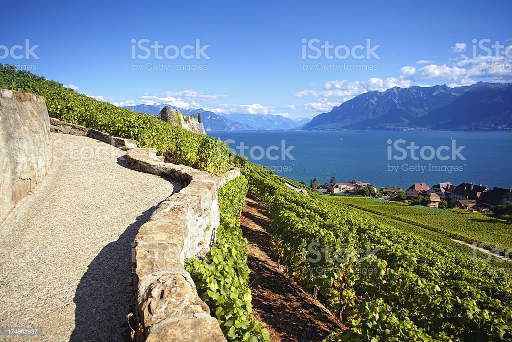 Vineyards in Lavaux royalty-free stock photo