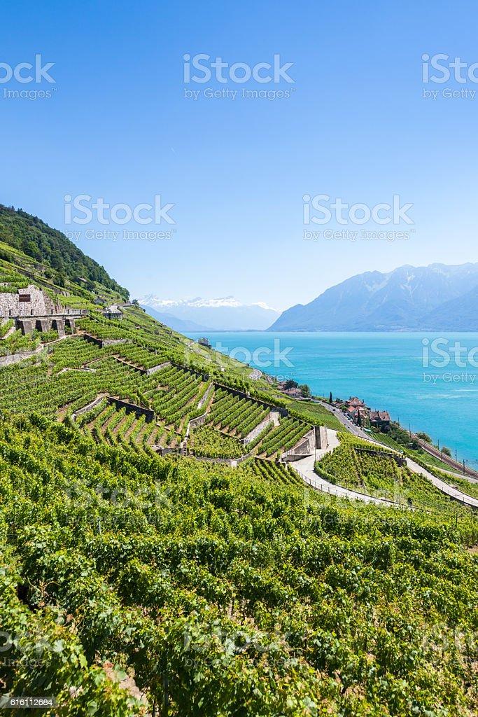 Vineyards in Lavaux region - Terrasses de Lavaux terraces, Switz stock photo