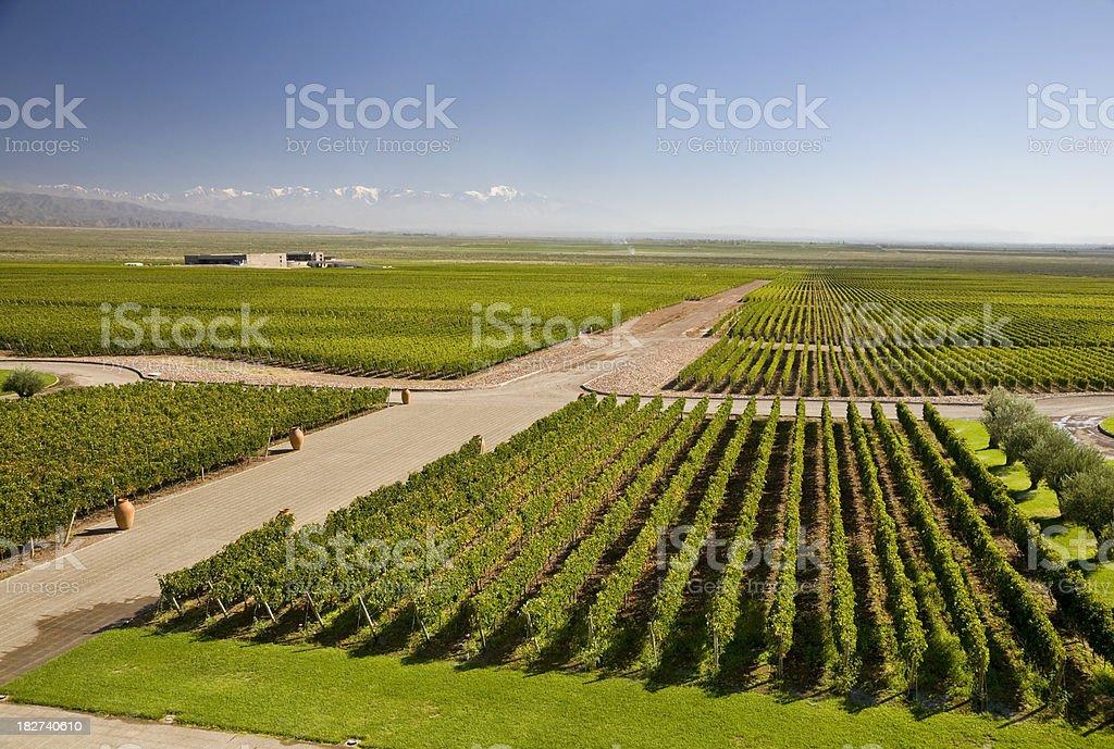 Vineyards in Mendoza royalty-free stock photo