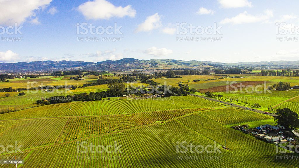 Vineyards in Napa Valley, Northern California stock photo