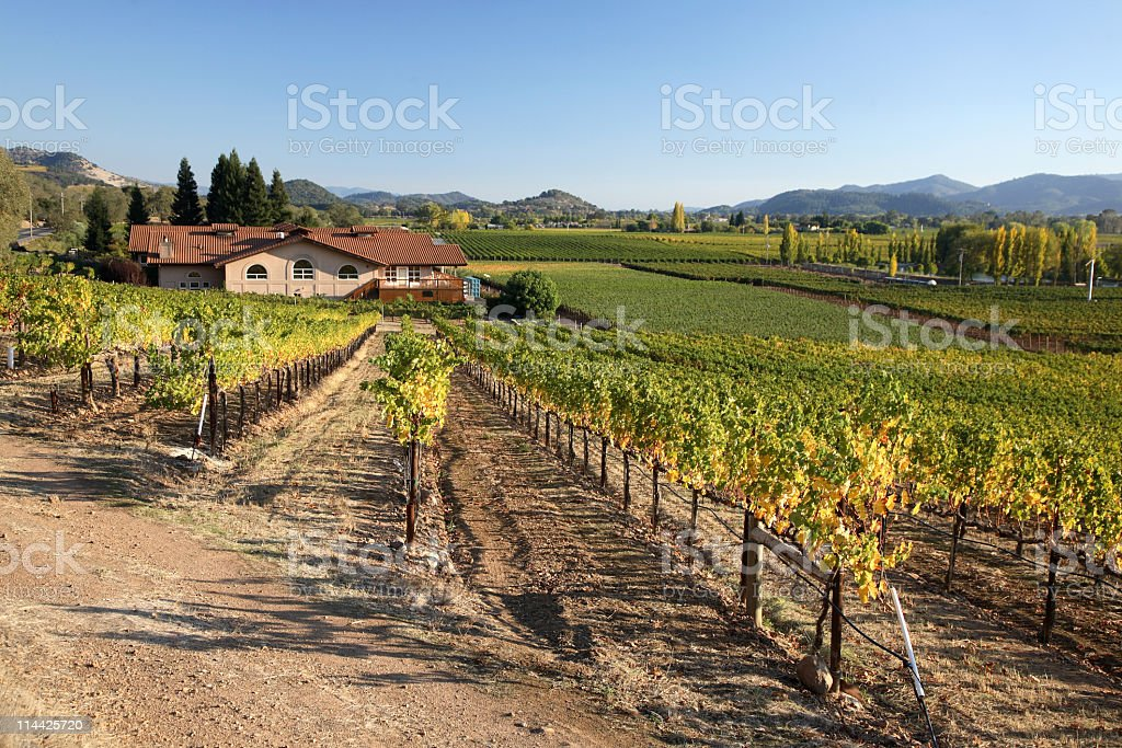 Vineyards in Napa Valley royalty-free stock photo