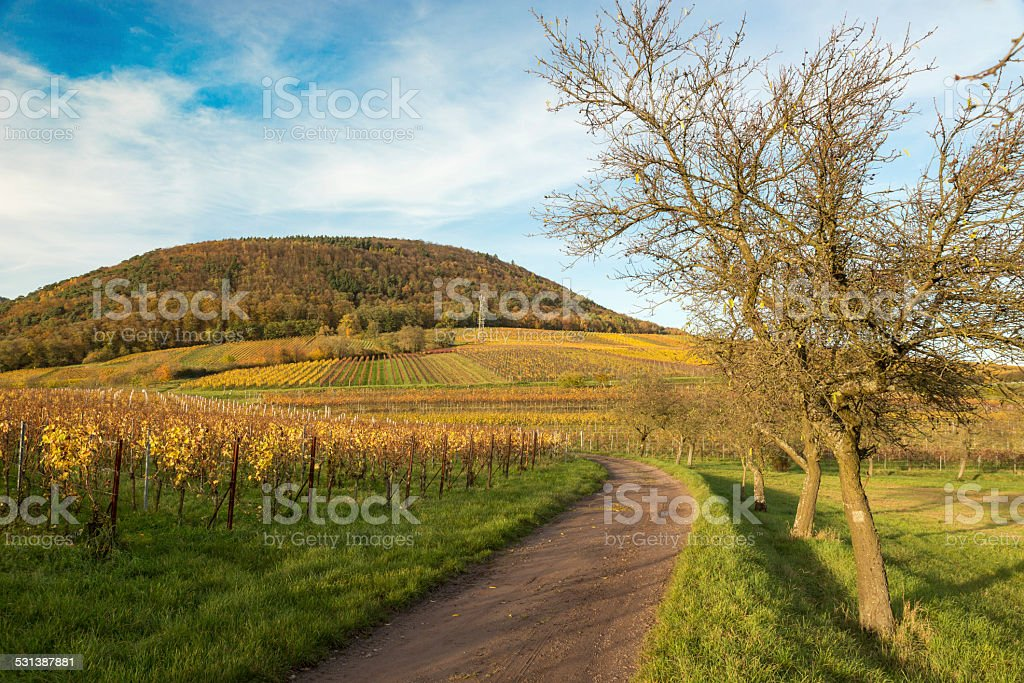 Vineyards in Pfalz at autumn time, Germany stock photo