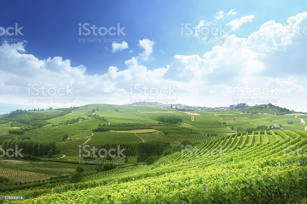 vineyards in Piedmont, Italy royalty-free stock photo
