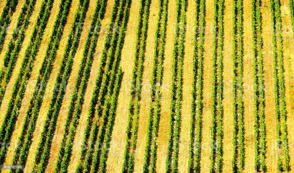 Vineyards in Rhenish Hesse (Rheinhessen), Rhineland Palatinate, Germany stock photo
