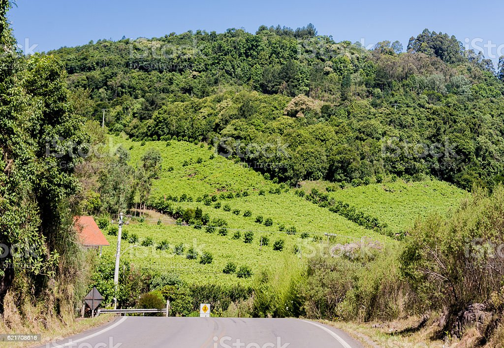 Vineyards in Rio Grande do Sul stock photo
