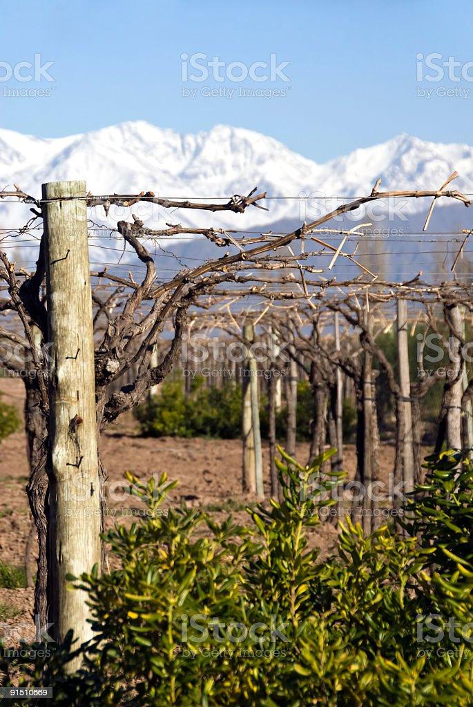 Vineyards in Spring royalty-free stock photo